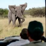 Qual é a sua intuição sobre esse ataque de elefante ?