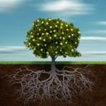 Quais são as raízes da intuição? visão científica